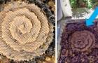 Deze bijen bouwen spiraalvormige bijenkorven en wetenschappers begrijpen nog niet waarom