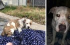 A family abandons their dog on the side of the road: for days, she waited in the same spot they left her