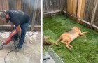 Um homem passa o final de semana inteiro trabalhando duro para dar ao cão adotivo um jardim perfeito