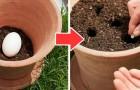 Il trucco dell'uovo crudo nei vasi: il metodo naturale e a costo zero per fertilizzare al meglio le piante