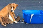 Una cagnolina viene abbandonata con i suoi 9 cuccioli: la terribile scoperta nel parcheggio di una chiesa
