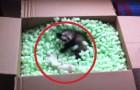 Diese Frettchen entdecken die Schachtel ihrer Träume. Was für eine Reaktion!