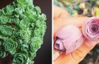 Diese sukkulente Pflanze hat eine so besondere Form, dass sie von vielen Menschen mit einer Rose verwechselt wird
