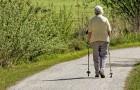 Zu Fuß gehen lockert die Gelenke, kann Herz-Kreislauferkrankungen vorbeugen und motiviert