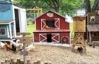 Un homme construit une mini-ville pour les poules de sa femme : on dirait le décor d'un film de western