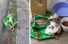 Ils abandonnent un chien sur le bord de la route, enfermé dans un sac : un homme le sauve et lui trouve une famille