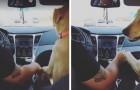 De hond laat de vrouw op de achterbank zitten en houdt dan de hand van haar man vast: de scène is hilarisch