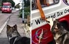 Ogni giorno questa cagnolina aspetta il furgoncino dei gelati davanti casa per concedersi una pausa gustosa
