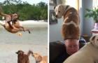 Diese 20 Fotos zeigen, dass Hunde selbst den traurigsten Tag aufhellen können