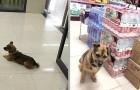 Un cagnolino aspetta per 3 mesi in ospedale dopo che il suo padrone è morto per Coronavirus