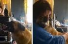 Cette petite chienne a parcouru plus de 60 km pour retrouver la femme qui l'a sauvée
