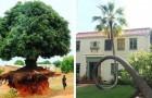 11 bomen die er niets van wilden weten om dood te gaan en zich hebben aangepast aan hun nieuwe leven