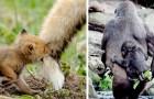 15 pais do reino animal que sabem ser tão amorosos quanto nós humanos, ou até mais...