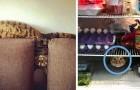 15 foto's van katten die in de meest vreemde en meest hilarische situaties zijn vastgelegd