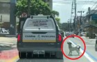En hemlös blir arresterad: hans trogne lille hund följer efter polisbilen för att inte överge mannen