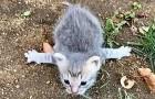Una gattina randagia con una rara malattia alle zampe viene salvata e impara a camminare da sola