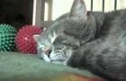 Cada vez que ele tosse seu gato responde em maneira muito doce