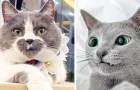 """22 katten die Moeder Natuur heeft voorzien van onvergetelijke """"afwijkingen"""""""