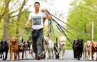 Questo ragazzo riesce a portare a spasso oltre 20 cani alla volta, immortalandoli in adorabili