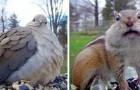 Eine Frau installiert eine Kamera im Innenhof, um die ganze Schönheit der wilden Tiere aus nächster Nähe einzufangen