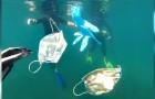 Guanti e mascherine stanno diventando una nuova fonte d'inquinamento per i nostri mari