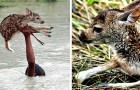Um menino mergulha em um rio com forte correnteza para salvar um pequeno cervo que tinha caído na água