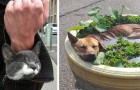 16 Haustiere, die an den unvorstellbarsten Orten plötzlich eingeschlafen sind