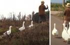 4 gansos se convierten en