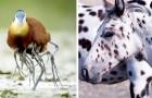 15 animali talmente assurdi che sembrano usciti da un film di fantascienza