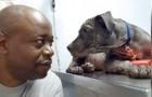 Un uomo salva un cane dalla strada: per ringraziarlo, l'animale gli dona uno sguardo carico di gratitudine