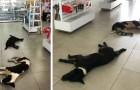 Uma mulher permite que cães de rua entrem em sua loja para descansar e se refrescar com água e comida