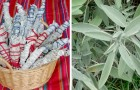 Sage and rosemary bundles: according to Native American tradition, these two herbs can help ward off negative energies