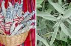 I bastoncini di salvia e rosmarino che secondo la tradizione dei Nativi Americani allontanano le energie negative