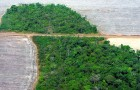Déforestation : en 2019, nous avons perdu l'équivalent d'un terrain de football toutes les 6 secondes