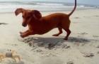En forcerad, men underhållande vänskap. Hunden är överförtjust i krabban, men det är tyvärr inte ömsesidigt.