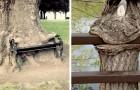 15 Bäume, die nicht anders konnten, als alles vor sich