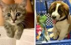 20 sällskapsdjur som är så gulliga att det var omöjligt för deras ägare att inte fota dem