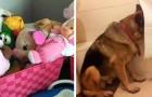 15 chiens qui ont essayé de se cacher aux yeux de leurs maîtres mais qui n'ont réussi qu'à les faire rire