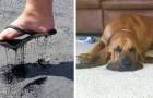 14 photos qui montrent parfaitement les effets du chaud sur les choses, les animaux et les personnes