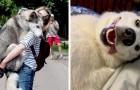 15 foto's die laten zien dat husky's tot de schattigste en grappigste honden ter wereld behoren