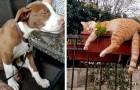 15 huisdieren die op de meest ondenkbare plaatsen en posities in slaap zijn gevallen
