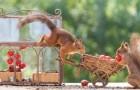 Fotografa scoiattoli da più di 6 anni con diverse ambientazioni: le sue foto raccontano un mondo da fiaba