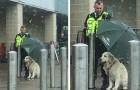 Ripara un cane dalla pioggia con il suo ombrello: il gesto altruista del dipendente di un supermercato