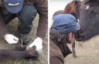 Man frees wild horse who got tangled up in a chain: horse thanks him with a