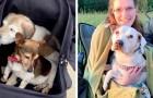 Un'ex-infermiera ha aperto un ospizio per cani anziani: così trascorrono con dignità l'ultima parte della loro vita