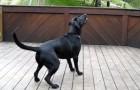 Wenn Hunde einen geheimen Wunsch haben, dann muss es dieser sein!