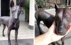 Piper, il cane messicano che ricorda un'antica statua egizia in granito