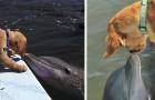 Video Video's van Dolfijnen Dolfijnen