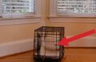 Dankzij een camera, is het mysterie van deze pup opgelost, ze ontsnapt uit haar kooi