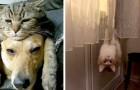 10 Haustiere, die ihre menschlichen Besitzer zum totlachen brachten